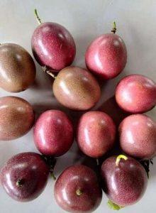 百香果吃完核别扔,埋在土里,7天发芽来年就结果