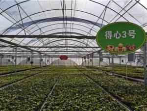 闽西长汀县南山镇一个百香果农有惊无险的创业路